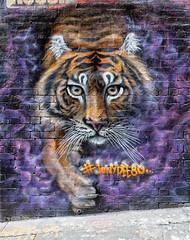 JBoy Hosier Lane 2020-01-11 (5D4_9375) (ajhaysom) Tags: jboy hosierlane streetart graffiti melbourne australia canoneos5dmkiv canon1635l