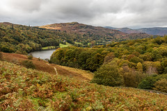 Grasmere from Loughrigg Terrace (Keith now in Wiltshire) Tags: grasmere lake mere water lakedistrict nationalpark cumbria landscape mountain woodland forest autumn tree bracken