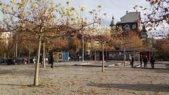 Feuilles mortes à Fribourg... (8pl) Tags: automne fribourg suisse feuillesmortes place extérieur pérolles arbres rue pétanque gens jeu urbain