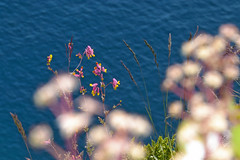 (561jaclyn) Tags: cliff mountains rocks rock flowers flower pink pretty beautiful landscape lake lakesuperior superior blue water photo photography photographer plant plants adventure hike hiking