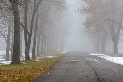 November Fog (rdodson76) Tags: fog weather climate season seasonal winter fall autumn snow grass leaves trees road street line path route outside outdoors landscape cool cold mood missouri change