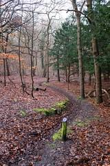 (Carlos Breton Aguilar) Tags: kennemerland bos equestre forêt woods autumn automen automne