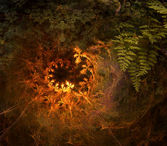 Spiral Fern (jsbanks42) Tags: spiral fern green stilllife fractal fantasy abstract gold ancient wallpaper experimantal nature