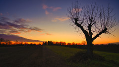 Walnussbaum (KaAuenwasser) Tags: sonnenuntergang landschaft natur baum bäume farbe farben himmel wolken iffezheim januar 2020 licht schatten feld acker walnussbaum