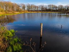Naturschutz pur am Böttjer Moor - 2 (mohnblume2013) Tags: moor see teich natur naturschutz bäume ufer sonne