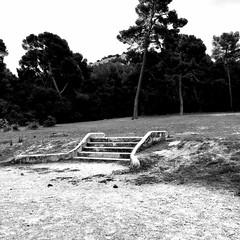 « Un désordre d'arbres noirs » Tomas Transtromer (woltarise) Tags: poètesuédois tomastranstromer poésie ambiance iphone7 france portedumassifdescalanques campagnepastré parcmontredon marseille