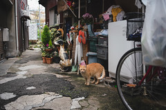 猫 (fumi*23) Tags: ilce7rm3 sony street sel35f18f emount 35mm feline fe35mmf18 a7r3 animal alley alleyway ねこ 猫 ソニー 路地 大阪 城東区 cat chat neko gato katze