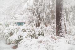Another Shot of Snow (HFF) (buffdawgus) Tags: winterlandscape gardenshed sierranevadafoothills landscape winter cementhillhouse cementhilroad mybackyard lightroom6 snowylandscape topazstudio nevadacounty nevadacity canon5dmarkiii canonef24105mmf4lisusm