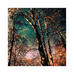 Trees (b_kohnert) Tags: outdoor trees wood forest landscape nature painting digitalpainting digitalart