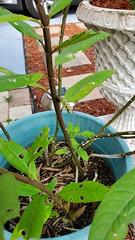 September 7, 2019 (osseous) Tags: 2019september plant plants plantlife
