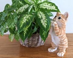 Simon and the Miracle Plant (Bennilover) Tags: plants greenery indoorplants cat cats sculpture impressed simon pothos smileonsaturday getnatureinyourhome basket gift