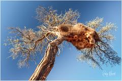 Abstract By Nature (RudyMareelPhotography) Tags: africa jimmynelson karasregion namibia natgeotravel philetairussocius rudymareelphotography sonop birdsnest ngc sociableweaver travel travelphotography wanderlust hardapregion flickrclickx flickr
