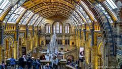 London, United Kingdom: Natural History Museum (nabobswims) Tags: england gb greatbritain hdr highdynamicrange ilce6000 lightroom london mirrorless nabob nabobswims naturalhistorymuseum photomatix sel18105g sonya6000 uk unitedkingdom