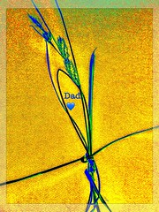 """The ties that bind"" (Marcia Portess-Thanks for a million+ views.) Tags: art love grass photomanipulation effects dad map seeds tied minimalism thetiesthatbind elarte marciaportess marciaaportess explore explore'd"