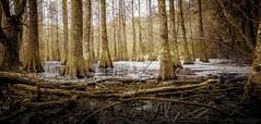 fondre l'hiver (JDS Fine Art Photography) Tags: trees nature winter landscape water beauty naturalbeauty inspirational sunrise