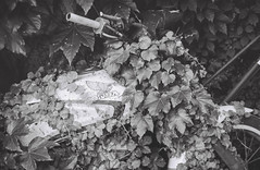 Parking place (Alice Korotaeva) Tags: ivy nature urban filmphotography film film35 filmfeed filmisnotdead filmcommunity filmforlife filmlife filmlove ishootfilm shootfilm ilovefilm 35mm 35мм 35mmfilm 35mmphotography analog analugue analigvibes analoglife analogphotography analogcommunity vintage retro grain grainisgood grainislife lomography lomo blackwhite blackandwhitephotography blackandwhite bnw bnwfilm bnwlife bnwmood bnmmood monochrome monochromelove mono leica leicacl leitz rangefinder summicron summicron40 foma fomafilm foma400 пленка