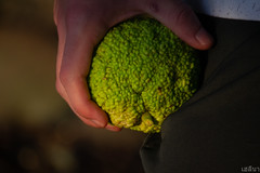 Pocketing the Orange (เฮลีนา่) Tags: osage orange green pocket hand human foreground person nature fruit seeds