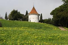 Monsanto (hans pohl) Tags: portugal lisbonne monsanto nature paysages landscapes fleurs flowers bâtiments buildings tours towers