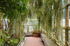 The Aquatic House (apta_2050) Tags: aquatichouse conservatory greenhouse botanicgarden botanicalgarden plants park naturephotography citypark brooklynbotanicgarden brooklyn newyork