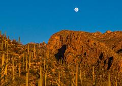 Moonrise (docoverachiever) Tags: pimacanyontrail cactus santacatalinamountains scenery desert cacti nature catalinas mountains fullmoon arizona saguaro moon landscape tucson