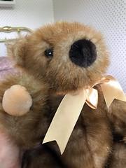 Ginger Bear (daryl_mitchell) Tags: regina saskatchewan canada summer 2019 ginger bear stuffed animal