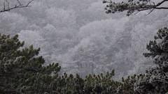 Frostige Aussichten / Frosty views (ursula.valtiner) Tags: wald forest wood raureif badenbeiwien whitefrost niederösterreich loweraustria austria autriche österreich