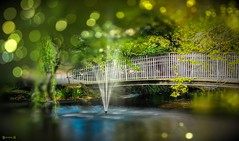 #Bridge - 7987 (✵ΨᗩSᗰIᘉᗴ HᗴᘉS✵90 000 000 THXS) Tags: bridge anvers zoodanvers antwerpen water bokeh belgium europa aaa namuroise look photo friends be yasminehens interest eu fr party greatphotographers lanamuroise flickering challenge