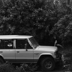 Welcome To The Jungle (dogs857) Tags: fujifilmxpro2 fujixf35mmf2 acros pajero trees absoluteblackandwhite
