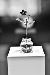 Simplicity (boxerrod) Tags: monochrome blackwhite whiteblack flower water vase nikond7200 sigma art lenses simplicity leaf shadow