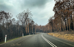 Dunns Creek Road between Mossy Point and Batemans Bay (caralan393) Tags: bushfire devastation fire curves countryroad
