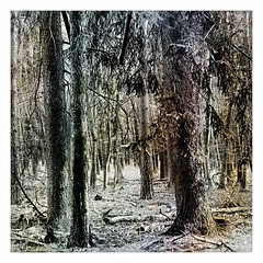 Forest (b_kohnert) Tags: digitalart digitalpainting painting nature landscape forest wood trees outdoor