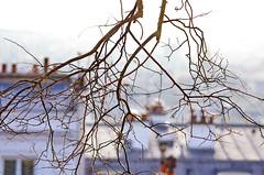 122 Paris Janvier 2020 - les toits de Paris depuis la Butte Montmartre (paspog) Tags: france paris montmartre butte buttemontmartre 2020 january januar janvier toitsdeparis roofsofparis dächer toits roofs cheminées chimneys