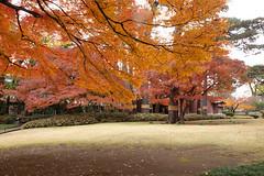 Otaguro park 6 (Errai 21) Tags: 大田黒公園の紅葉 東京 autumn leaves landscape landscapephoto 風景写真 photography 写真好きな人と繋がりたい 写真撮ってる人と繋がりたいotaguro park 6