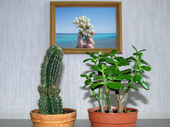 Winter set (iolarkov) Tags: art winter home smileonsaturday getnatureinyourhome plant domestic succulent table