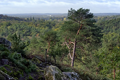 Denecourt path 11 (hbensliman.free.fr) Tags: pentax pentaxart forest plant view panorama autumn season europe outdoor outside trees foliage leaf landscape travel france fontainebleau