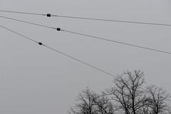 (Mikko Luntiala) Tags: 2020 afsnikkor2470mmf28ged bw blackandwhite d600 finland gray grey harmaa helsinki january mikkoluntiala mustavalkoinen nikond600 puut sky suomi taivas tammikuu trees