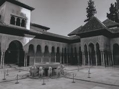 Patio de los leones (Sara Soler) Tags: patiodelosleones alhambra granada patio terrace art arquitectura muslim musulmán españa spain blancoynegro blackwhite