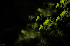 SoS #Get nature in your home (FLOCVROFF 1M views Thanks to you all) Tags: smileonsaturdays get nature your home chivaroff light shadows dark green