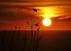CA Sunset (Bhavanish) Tags: olympus nature bokeh cloudysky orangesky sunset sun