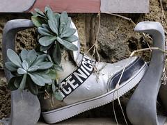 Pflanzenschuh (Peter Drach (aka PeteDragomir)) Tags: smileonsaturday getnatureinyourhome shoe plant upcycling inside recycling usine de chaussures à lintérieur du recyclage 鞋厂回收内部回收 τα παπούτσια ανακυκλώνονται στο εσωτερικό τησ ανακύκλωσησ riciclaggio di impianti calzatura allinterno del 靴工場のリサイクル loji kasut dalam kitar semula переработка обувной фабрики внутри переработки reciclaje plantas calzado dentro geri dönüşüm içinde ayakkabı tesisi