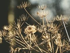 Nature Bokeh - Tarbeker Moor   17. Januar 2020   Alt Erfrade - Kreis Segeberg - Schleswig-Holstein (torstenbehrens) Tags: nature bokeh tarbeker moor   17 januar 2020 alt erfrade kreis segeberg schleswigholstein olympus ep5 ef18200mm f35