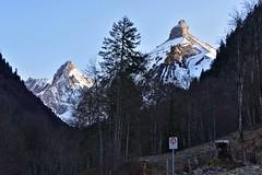 Zindlerspitz / Rossalplispitz / Brunnelistock (Kanton Schwyz/Kanton Glarus) (Bergwandern Alpen) Tags: alpen alps berge mountains berg mountain zindlerspitz rossalplispitz brunnelistock kantonschwyz bergwald mountainforest tal valley