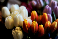 How about more tulips? (Fnikos) Tags: flower flor fiore tulip tulipan leaf leaves nature naturaleza natura natur color colour colores colours colors multicolor green white yellow orange purple dark light shadow shadows dof depth depthoffield outside outdoor