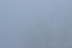 Trees in the mist (capparezza) Tags: tree mist nebel baum bäume trees wetter weather fritzens tirol tyrol österreich austria herbst fall trüb dull