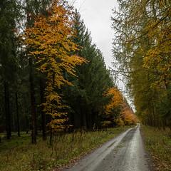 Unser Wald  (24) (berndtolksdorf1) Tags: deutschland thüringen wald jahreszeit herbst autumn bäume laubfärbung weg outdoor