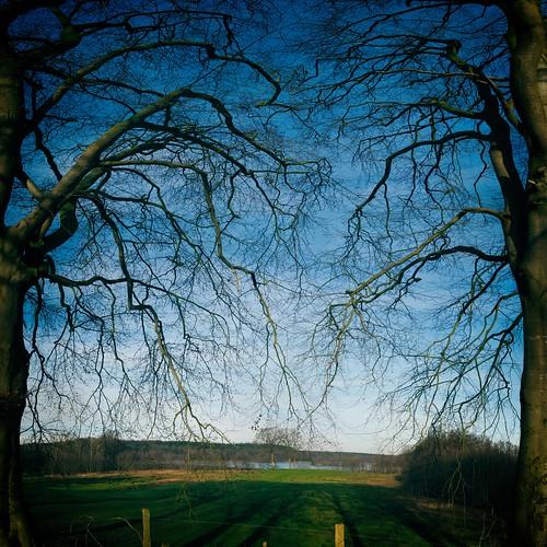 Bäume - Wiese - See   17. Januar 2020   Belau - Kreis Plön - Schleswig-Holstein - Deutschland