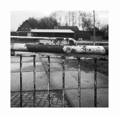 rusty gate (ha*voc) Tags: agfaisolette45 solinar85mmf45 film 120 mediumformat 6x6 square kodaktmax400 ilfordid11 bw urban rusty empty peopleless mundane haarlem haarlemmerliede