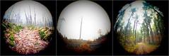 Circuit du Paradis, Cognac-la-Forêt. (matériel brouilleur) Tags: lumix panasoniclumix fisheye fisheyelens plasticlens lomographylens lomography lomo triptyque triptyqch triptico circuit paradis cognaclaforet hautevienne limousin nouvelleaquitaine foret forest bosque