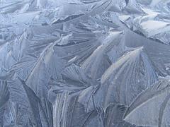 Frost Fronds (cazjane97) Tags: frosty frost january car patterns fronds frostpatternsonthecarbonnet