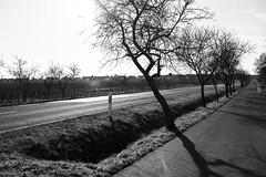Frühlingsahnung 13° (Manfred Hofmann) Tags: bild schwarzweis öffentlich flickr orte brd kurpfalz projekte jahreszeiten baddürkheim pfalz